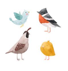 Cute watercolor chick lark quail bird vector