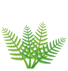 green fern leaves vector image vector image