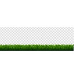 green grass border transparent background vector image