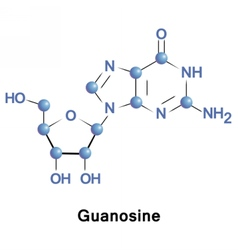 Guanosine guanine and ribose vector