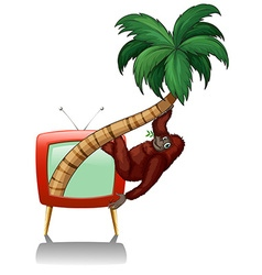 Television screen with urangutan on the tree vector