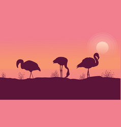 scene flamingo at sunrise collection vector image vector image