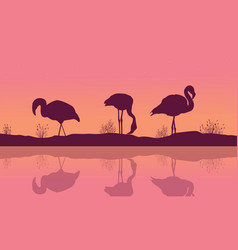 riverbank landscape with flamingo silhouettes vector image vector image
