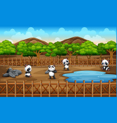 scene with many pandas in zoo park open cage vector image