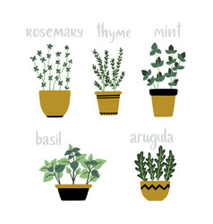 Set of culinary herbs in pots green growing vector