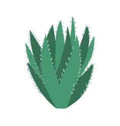 Aloe vera cactus in doodle style cute prickly vector
