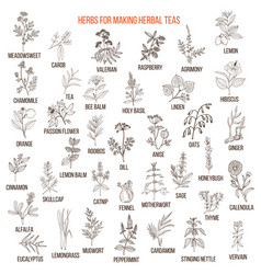Best herbs for teas vector