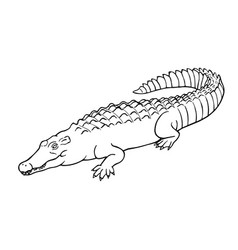 hand drawn crocodile linear style line vector image