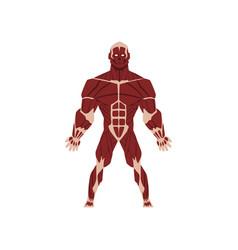 Human biological skeletal system anatomy of human vector