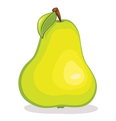 Isolated pear fruit vector