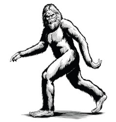 Walking sasquatch black white vector