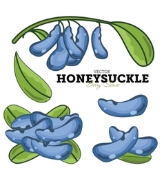 Honeysuckle Set vector image vector image