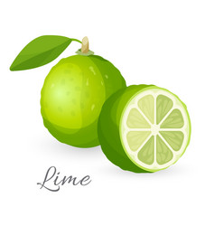 lime exotic fruit whole and half green lemon vector image