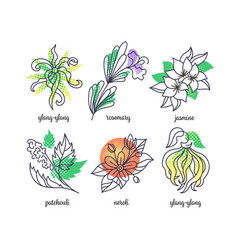 perfume herbs line and color icons set vector image