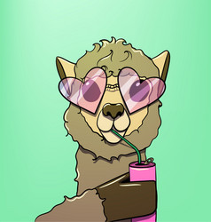 Cartoon lama sipping a drink from a straw vector