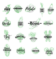 farm vegetables sketch lettering vector image