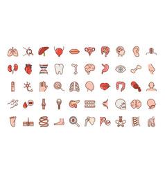 human body anatomy organs health liver eye brain vector image