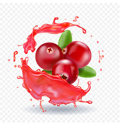 Cranberry in juice splash realistic vector