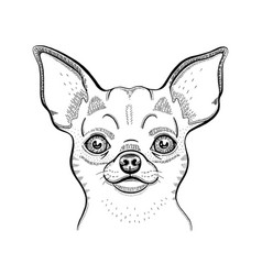 cute chihuahua t-shirt print design cool animal vector image