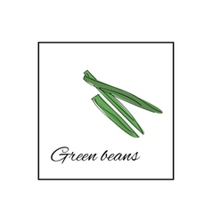 Fresh green beans whole and sliced vector
