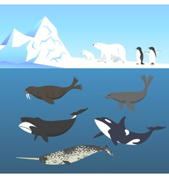 set of animals living in a cold climate Polar bear vector image