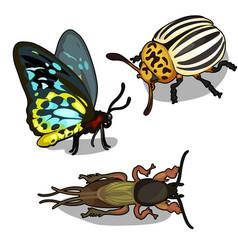 Set of butterflies colorado beetle and cockroach vector