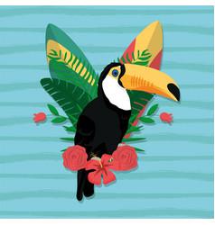 Tucan exotic bird vector
