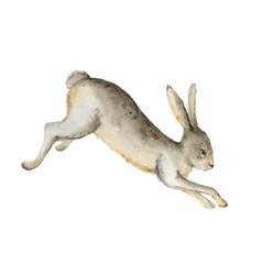 watercolor card with a hare isolated vector image