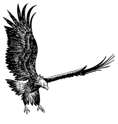 fighting eagle vector image vector image