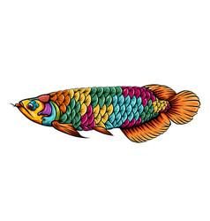 Arowana fish entangle with beautiful vector