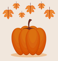 colorful pumpkin autumn symbol vector image