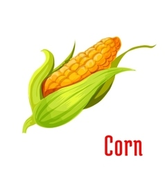 Corn ear vegetable plant icon vector