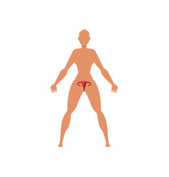 female biological sexual system anatomy of human vector image