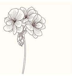 Geranium flower drawing vector