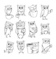 owl characters funny wild night birds with cup of vector image