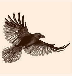 raven in flight vector image