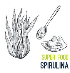 Spirulina super food hand drawn sketch vector