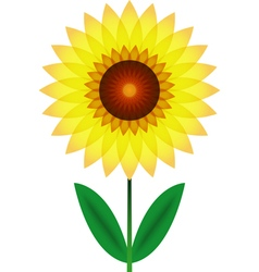 Beautiful sunflower for design vector image