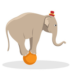 Circus trained elephant on the ball vector
