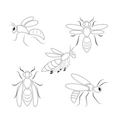 Icon set 5 wasps vector