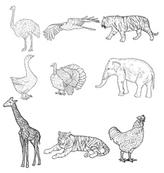 Sketch elephant tiger eagle rooster giraffe vector