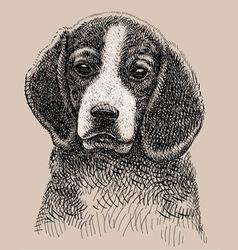 Dog drawing vector image vector image