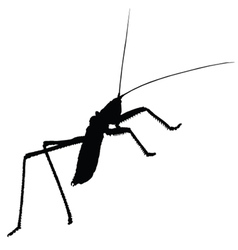 strange insect silhouette vector image