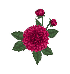 beautiful bouquet dahlia with the effect of a vector image