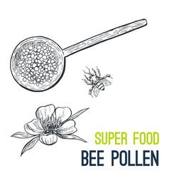 Bee pollen super food hand drawn sketch vector