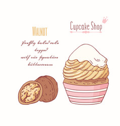 Hand drawn cupcake walnut flavor vector