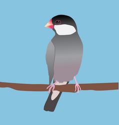 Java sparrow vector
