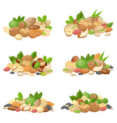 nuts bunch fruit kernels dried almond nut and vector image