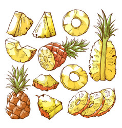 Pineapple fruit and sweet tropical fresh slices vector