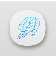 Spinach app icon vector